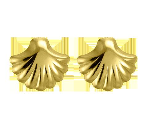 Shell Ear Studs